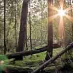 """""""Arboreal"""" by Homene"""
