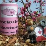"""Porkulus Maximus Tea and Confederate Bear"" by derekphoenix"