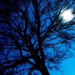 """Late Night"" by lbarrett"