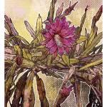 """""""Modern Florals: Epiphyllum"""" by karynlewis"""