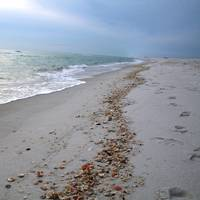 Shells on the Emerald Coast