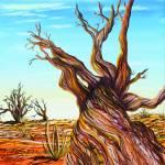"""Bristlecone Pine"" by AlexKube"