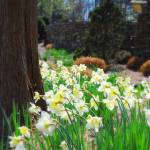 """""""Flowers in Aldridge Gardens"""" by Tracy_Nicole"""