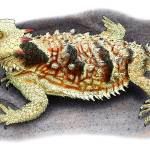 """Coastal Horned Lizard"" by inkart"