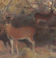 Whitetail at Dusk