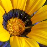 """Yellow Floral"" by claytonbruster"