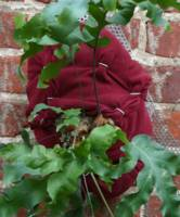 Hare's Foot Fern in a Red Velvet hoodie on Stainle