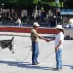 """mule amigos"" by wmhwilson"