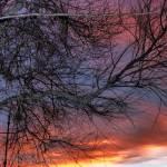 """sunset tree"" by Valentina"