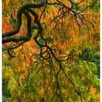 """""""Autumn colours"""" by GS"""