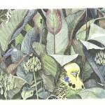 """""""A bird in the bush"""" by JohnFarman"""