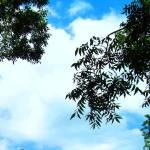 """blue sky"" by freespiritart"