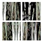 """Square Bamboo 4 x 4 gray pale green"" by LeslieTillmann"