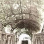 """Italian Arbor Gray"" by LeslieTillmann"