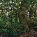 """""""Rain Forest"""" by SteveHunziker"""