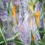 """""""Spring"""" by patriciaschnepf"""