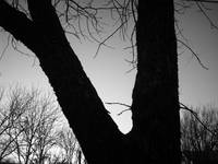 Silhouette of Tree in Grayscale