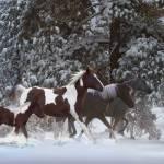 """""""Snowy Runners"""" by SteveHunziker"""
