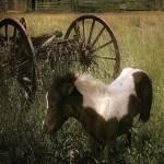 """Wagon Pony"" by SteveHunziker"