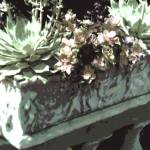 """Stone Planter with succulents Pale gray"" by LeslieTillmann"