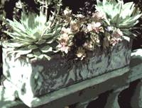 Stone Planter with succulents Pale gray