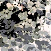 Leaves Square Neutral Black Gray