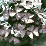 """Butterfly Plant pale neutral"" by LeslieTillmann"