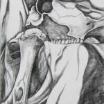 """Bones"" by KimGrier"