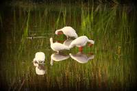 birds in reflection