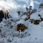 """""""SnowyBuffalo."""" by SteveHunziker"""