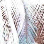 """Mexico palm 6B grays"" by LeslieTillmann"