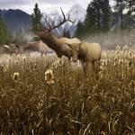 """""""Misty Elk"""" by SteveHunziker"""