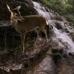 """Deer Falls"" by SteveHunziker"