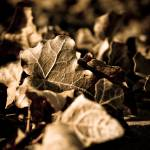 """""""Psych Bldg Leaves Sepia"""" by Floodlight"""