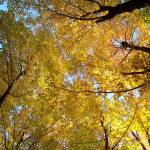 """""""The Canopy"""" by Floodlight"""