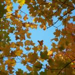 """""""The Canopy Close-up"""" by Floodlight"""