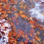 """""""Frozen Stream"""" by Floodlight"""
