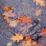 """Thawing Leaves"" by Floodlight"