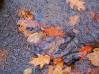 Thawing Leaves