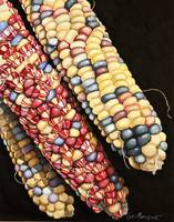 Ornamental Corn 1