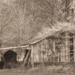 """Old Shed"" by poetryoflight"