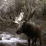 """""""Moose Creek"""" by SteveHunziker"""