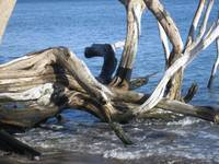 driftwood two