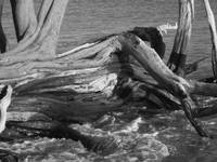 colorless driftwood two