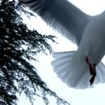 """In Flight....."" by mysterygirl"