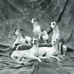 """whippets"" by bradscapes"