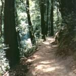 """Muir Trail"" by DavidBenAriel"