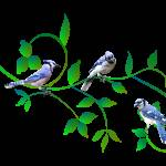 """Three Blue Jays"" by LaurieArnold"