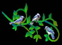 Three Blue Jays