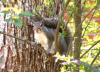 Squirrel Among Branches